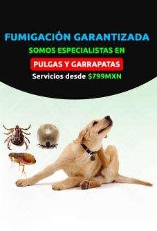 Fumigación efectiva de roedores, chinches y más, garantizado., azcapotzalco